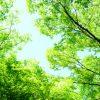 横浜銀行バンクカードローン申込、金利、提携ATM、返済方法詳細